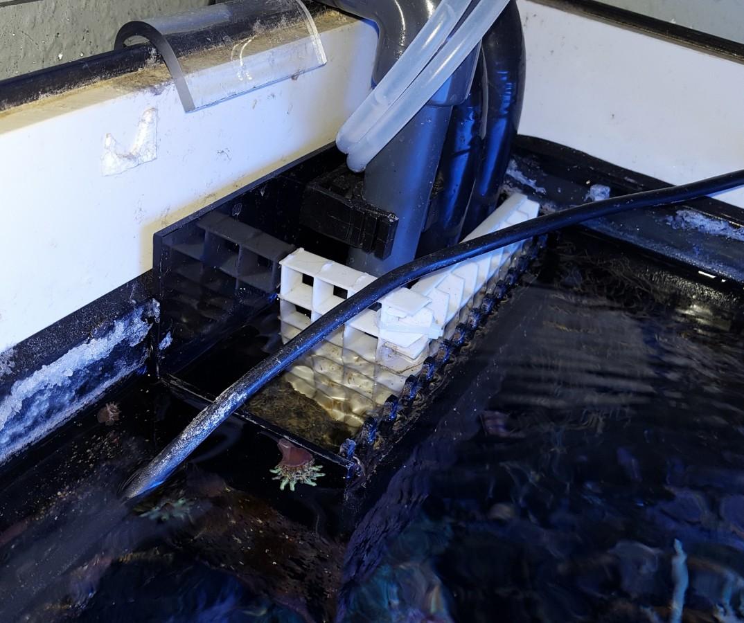 Überlaufkammer im Becken