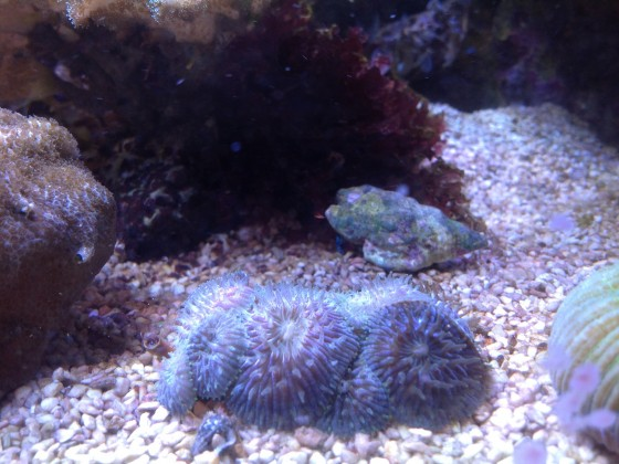 Fungia Mutterstock