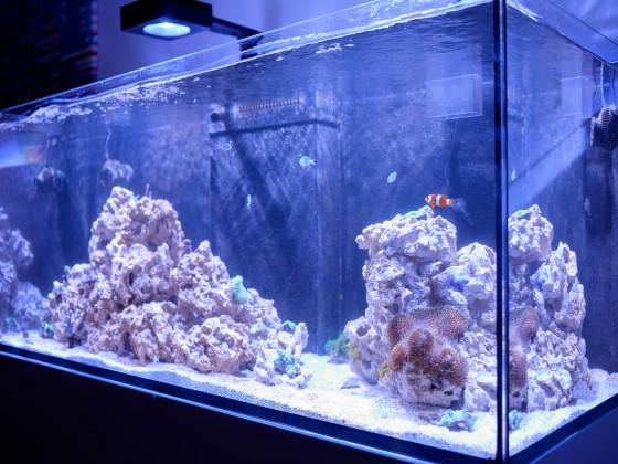 Mein Aquarium in der Schnellstartphase