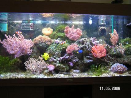 Aquarium Ca 60l Eine Hohe Bewunderung Gewinnen Aquarien