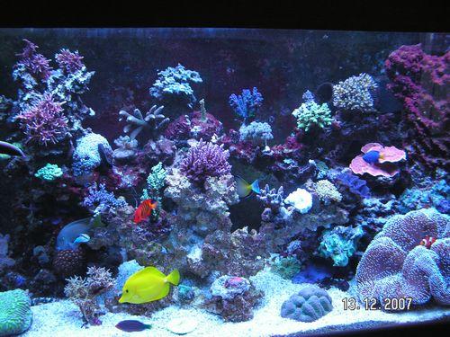 Aquarium Ca 60l Eine Hohe Bewunderung Gewinnen Haustierbedarf Fische & Aquarien