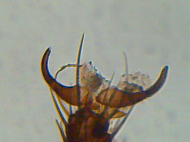 Mikroskop bei lidl meerwasser allgemein www.meerwasserforum.info