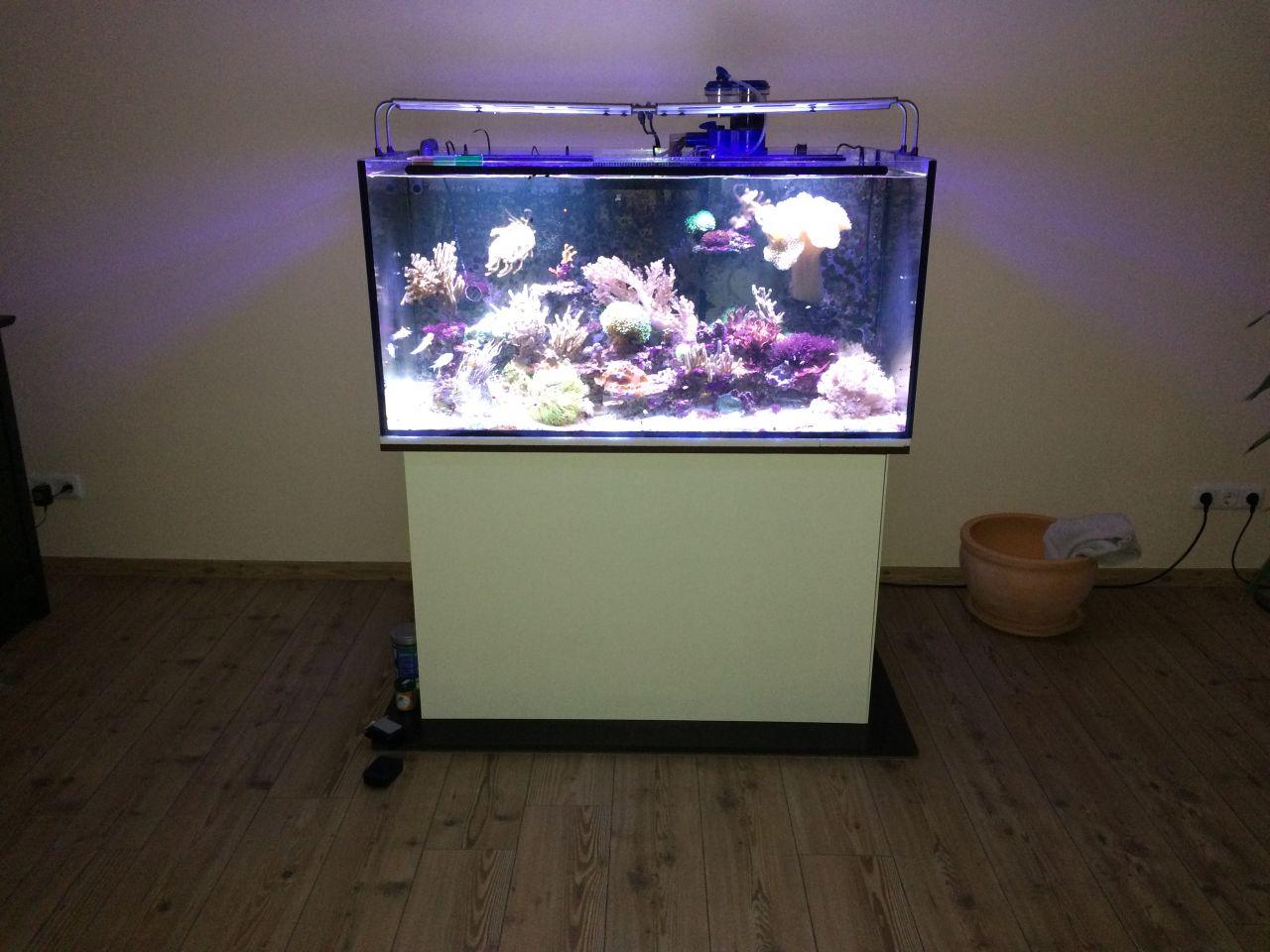 Aquarium Katzensicher Machen Meerwasser Allgemein Www Meerwasserforum Info