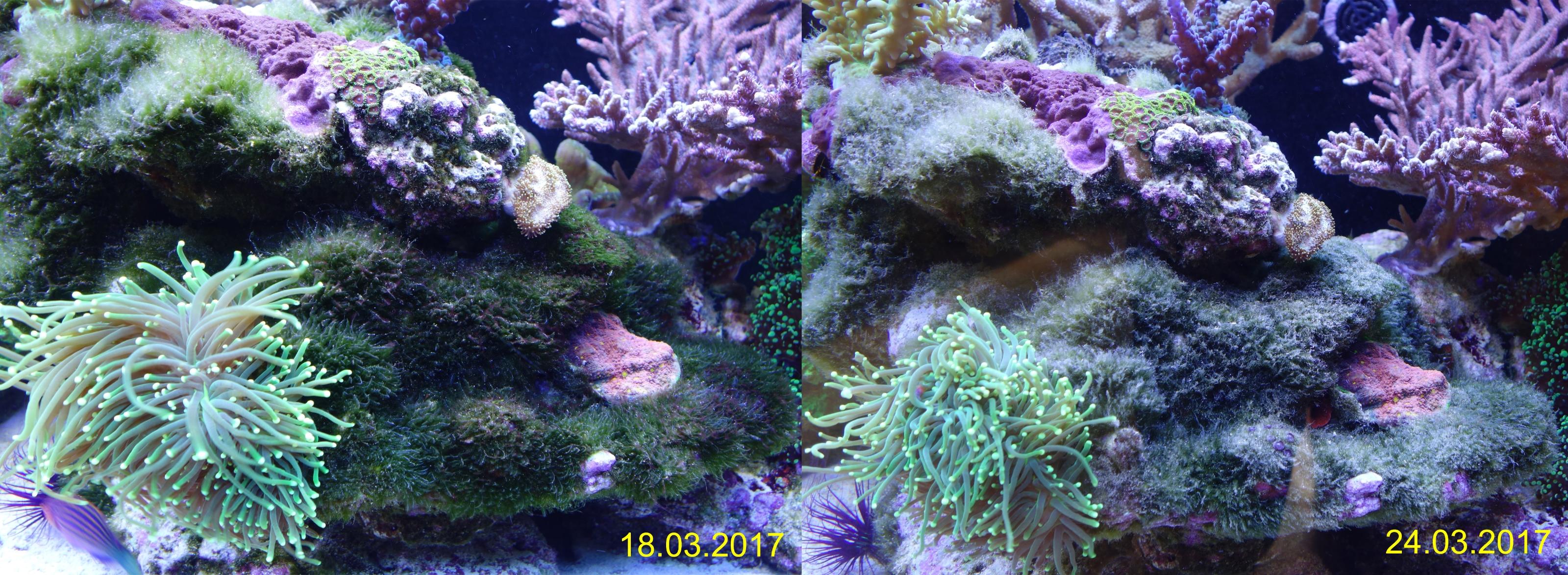bryopsis bek mpfen mit fluconazol 15 tage algen www. Black Bedroom Furniture Sets. Home Design Ideas
