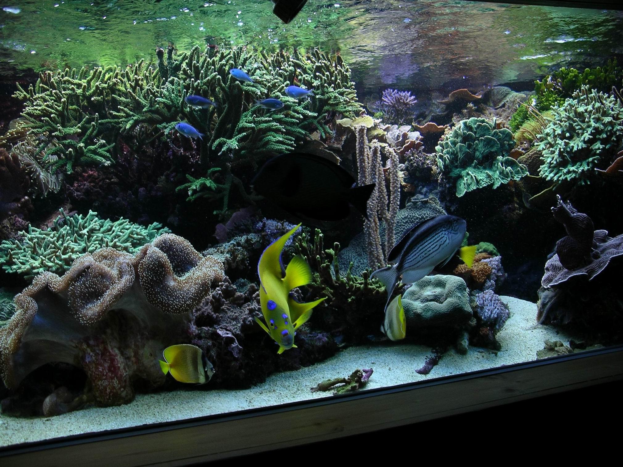 Haustierbedarf Aquarien Meerwasseraquarium 500l Produkte HeißEr Verkauf